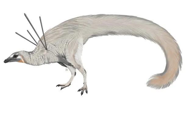 Ubirajara jubatus. - Image Credit : Wikimedia Commons